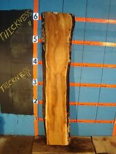 "#9306 1 5/8"" Thick black line spalted maple live edge slab"