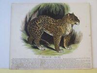 Vintage Print,JAGUAR,Society Christian Knowledge,c1857