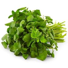 200+ WATERCRESS Organic Non-Gmo Seeds