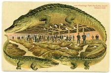 Alligator Border Florida 635 Tobacco Sale Sunny South