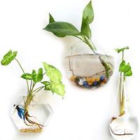 Creative Hanging Glass Planter Vase Terrarium Container Garden Wall Decor