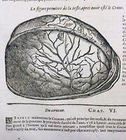 Cerveau en 1614 Cardiologie Angiologie Veine Médecine Ambroise Paré Rare Gravure
