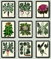 Unframed Botanical Print Set 9 Prints Antique French Vegetables Kitchen Wall Art