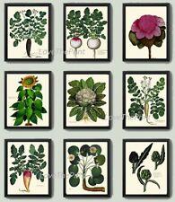 Unframed Botanical Print Set 9 Prints Antique French Vegetables Kitchen Wall Art