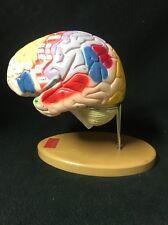 Denoyer Geppert 0172-00 Giant Functional Center Brain Anatomical Model A72