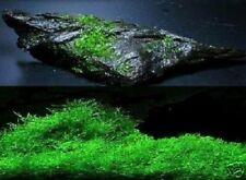 Wasserfarn Dekotipps Dekovorschläge für den Gartenteich Sauerstoffproduzent Deko