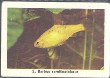 Rizla (NL) - Exotic Aquarium Fish, Series 1 - 2 - Golden Barb