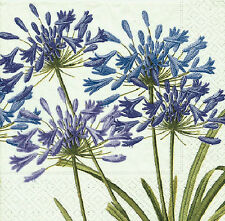 Agapanthus floral blue wedding paper Napkins Dinner size 40 cm sq 3 ply 20 pack
