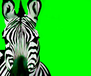 Zebra Lime By Ricky Dean Art Paper or Canvas Print