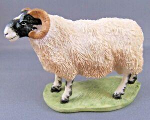 Border Fine Arts - Mini Farm Animals - BLACKFACED RAM