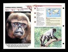 Common Woolly Monkey Wildlife Fact File Mammal Animal Card Home School Study