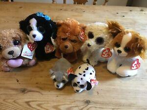 TY dog teddy bundle