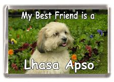 "Lhasa Apso Dog Fridge Magnet ""My Best Friend is a Lhasa Apso"" by Starprint"