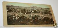 Antique 1900's Great Union Stock Yard Cattle Cows Chicago Stereoview Photo Rare