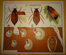 Carte affiche scolaire Rossignol Hanneton, araignée écrevisse