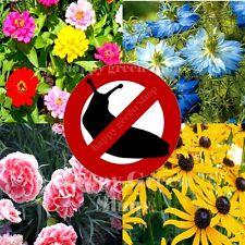 Mezcla de flores de babosa/Caracol Anti - 5 metros de cinta de semillas-Flores barrera natural