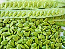 200 seed Leucaena Leucocephala Seed Popinac Bean Lead Miracle Tree Wild Tam D385
