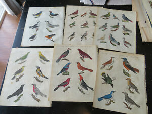 Song Birds  -  Bertuch , Natural History Engravings, Germany ca: 1798, 10 plates