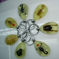 Scorpion Glow Lucite Keyring Keychain Insect Jewelry Taxidermy Gift SG