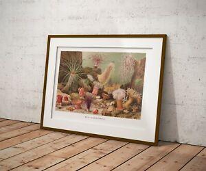 Sea Anemones-Illustration-vintage-Natural History - !9th Century - Wall Art
