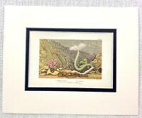 1855 Antico Stampa Mare Creatures Esotico Oceano Specie Naturale Storia Nautico