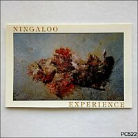 Ningaloo Experience Scorpion Fish Lighthouse Bay Exmouth WA Postcard (P522)
