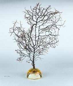 Wohndeko, Fächer Koralle Sea Fan Gorgonia Plexaurida auf Standfuß - 285mm