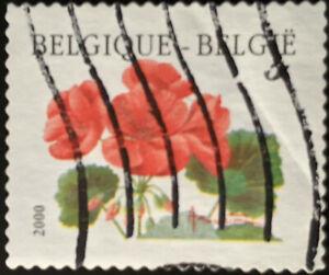 Stamp Belgium SG3528 2000 Flowers - Geranium Matador Used