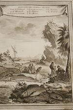 GRAVURE AFRIQUE POISSONS SIERRA LEONE MOINE BCKUNE TARDIEU1747