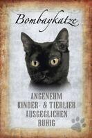 Bombaykatze Gato Cat Letrero de Metal Arqueado Metal Tin Sign 20 X 30CM