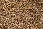 Honey Malt (5 lb) for Home Brew Beer Making