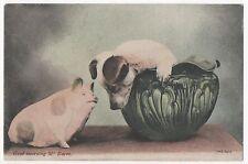 POSTCARD PIGS  Good Morning Mr Pig