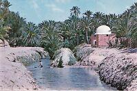 BF17879 tozeur riviere et marabot dans l oasis tunisia front/back image