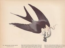 "1942 Vintage AUDUBON BIRDS #72 ""SWALLOW TAILED KITE"" Color Art Plate Litho SNAKE"