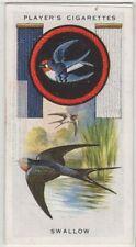 Swallow Bird Hirundo rustica 1930s  Ad Trade Card