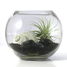 Air plant Kit in glass Terrarium With black and white theme | kit2