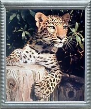 Leopard (Panther, Jaguar, Big Cat) Wild Animal Wall Decor Silver Framed Picture