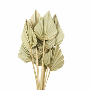 Bunch of 10 Dried Palm Spears, Palm Leaves, Dried Palm Leaves, Dried Flowers