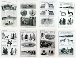 GREYHOUND COURSING ANTIQUE Dog Print articles 1906-09 Waterloo Cup The Bystander