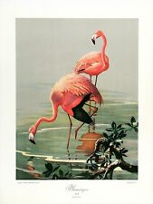 ROGER TORY PETERSON XRARE Vtg 1946 Halftone Litho FLAMINGOS Quaker State Litho