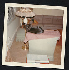 Vintage Photograph Adorable Cat Kitten Laying on Chair in Retro Living Room 1969