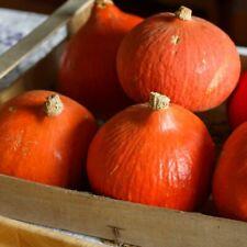 10 graines semences POTIMARRON ROUGE  produit en France ,bio potimaron jardin