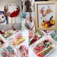 DIY Dried Leaf Eternal Flowers Plant Herbarium Jewelry Craft Home Party Decorat