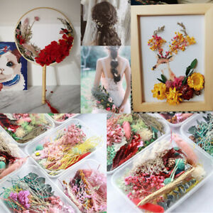 1 Box Dried Flower Dry Plants For Epoxy Resin Pendant Necklace Jewelry Making