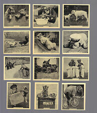 Cigarette Cards.Godfrey Phillips Tobacco. Our Favourites (Animals). (1935).(Set)