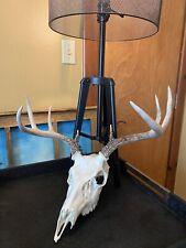 Real Whitetail Deer European skull antlers Bleached skull hunting taxidermy