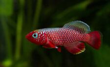 Beginner Live Aquarium Fish Eggs Ebay