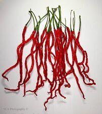 Chilli Pepper Seeds - Thunder Mountain Longhorn