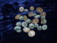 "Twenty Five (25) 1/2 to 1-1/4"" Green Limpet Sea Shells Craft"