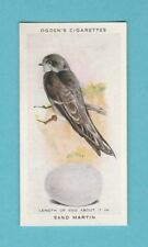 BIRDS  -  OGDENS - SCARCE  BRITISH  BIRDS  CARD  NO. 21  - SAND  MARTIN  -  1939